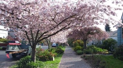 Seattle blooms